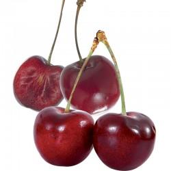 Cerisier Noire de Meched