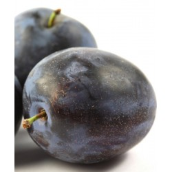 Prunier Black Amber