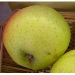Pommier Teint frais