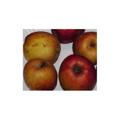 Pomme à cidre Douce moen