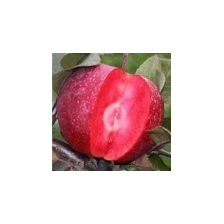 Pommier Red Merylinn (chair rouge)