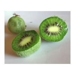Kiwi/Kiwaï Ananasnaya (femelle)