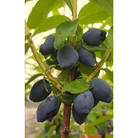 Baie de mai Fruity berry®