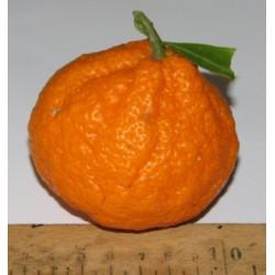 Mandarinier Satsuma 'Monstrueuse'